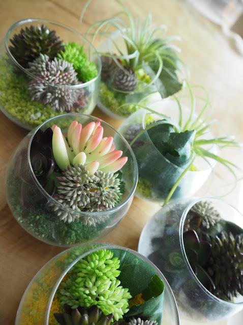送別品,送別会,多肉植物,送別,贈り物,枯れない花,エアープランツ