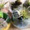 多肉植物ミニグラス|アーティフィシャルフラワー|プリザーブド新潟市中央区